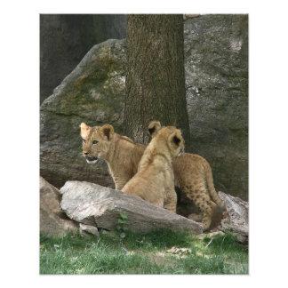 Foto de exploración de Cubs de león