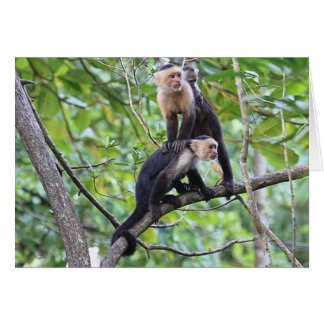 Foto de familia Blanco-Hecha frente del mono