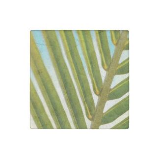 Foto de hoja de palma imán de piedra