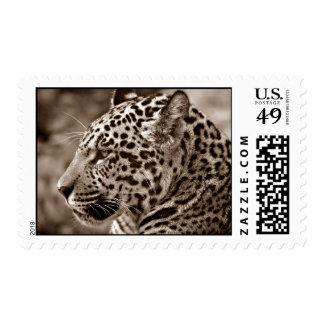Foto de Jaguar Envio