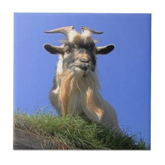 Foto de la cabra de Billy Teja Cerámica