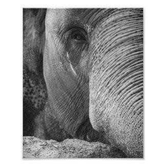 Foto de la cara del elefante asiático fotografía