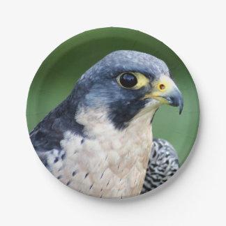 Foto de la cara del halcón de peregrino
