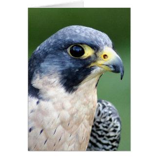 Foto de la cara del halcón de peregrino tarjeta de felicitación