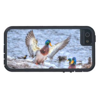 Foto de la fauna de Drake 5 del pato del pato iPhone 5 Carcasas