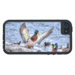 Foto de la fauna de Drake 5 del pato del pato silv iPhone 5 Funda