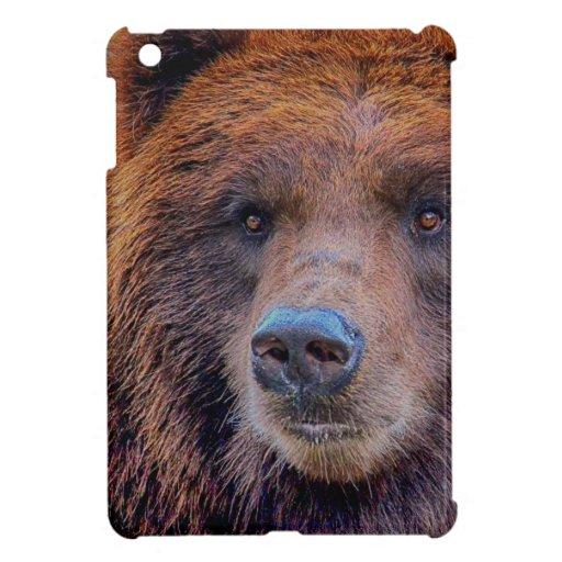 Foto de la fauna del oso de Brown del grisáceo