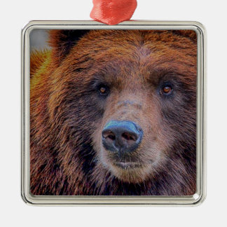 Foto de la fauna del oso de Brown del grisáceo Adornos