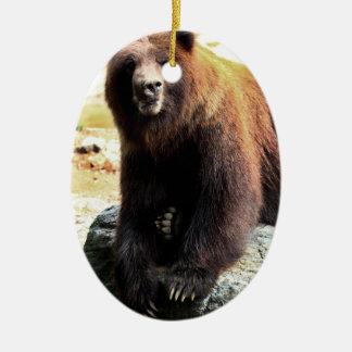Foto de la fauna del oso de Brown del grisáceo Ornamente De Reyes