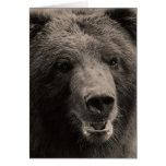 Foto de la fauna del oso grizzly de Brown Felicitacion