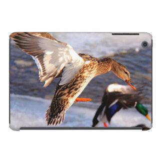 Foto de la fauna del pato del pato silvestre del funda para iPad mini retina