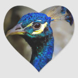 Foto de la fauna del pavo real calcomanías corazones