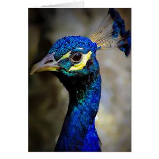 Foto de la fauna del pavo real tarjetón