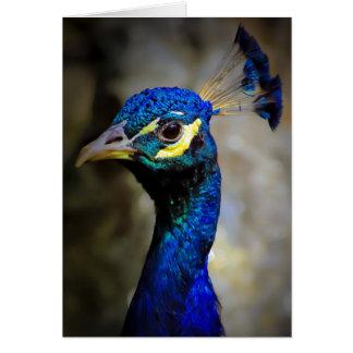 Foto de la fauna del pavo real felicitacion