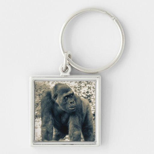 Foto de la fauna del primate del mono del gorila llavero