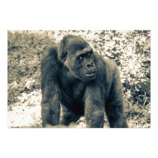 Foto de la fauna del primate del mono del gorila