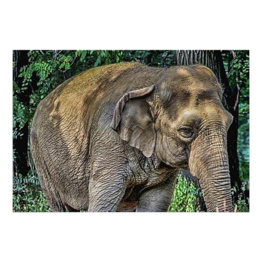 Foto de la fauna del retrato del elefante