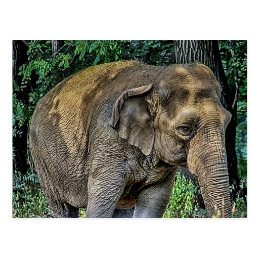 Foto de la fauna del retrato del elefante postal