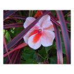 Foto de la flor