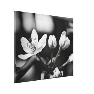Foto de la flor, B/W en lona Impresiones De Lienzo