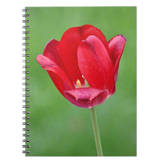 Foto de la flor de la primavera libreta