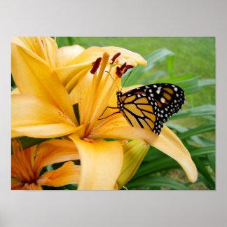 Foto de la flor del lirio del amarillo de la marip poster