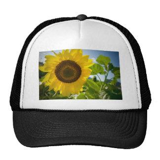 Foto de la flor gorras