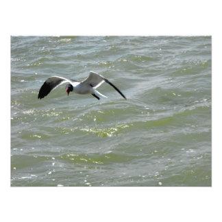 Foto de la gaviota del vuelo