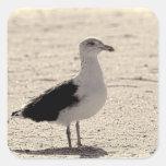 Foto de la gaviota en la playa de Coney Island Pegatina Cuadradas