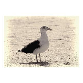 Foto de la gaviota en la playa de Coney Island