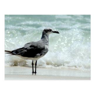 foto de la imagen del pájaro de la gaviota de la g tarjetas postales