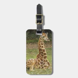 Foto de la jirafa etiquetas para maletas