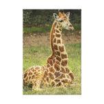 Foto de la jirafa impresion en lona