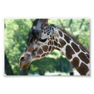 Foto de la jirafa