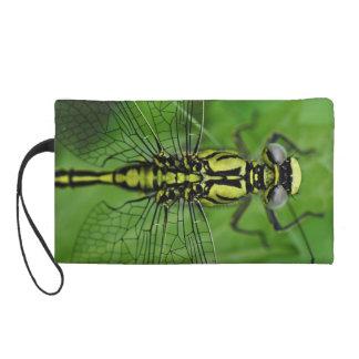 Foto de la macro de la libélula