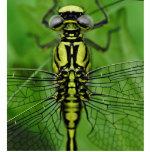Foto de la macro de la libélula esculturas fotograficas