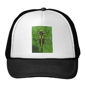 Foto de la macro de la libélula gorras