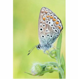 Foto de la macro de la mariposa escultura fotografica