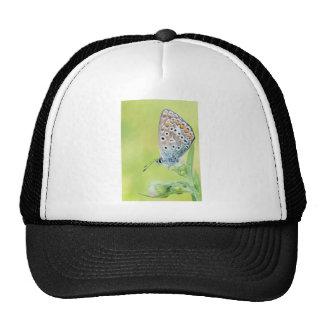 Foto de la macro de la mariposa gorras de camionero