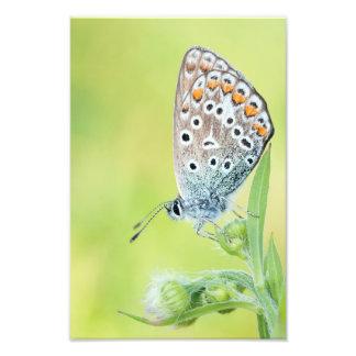 Foto de la macro de la mariposa