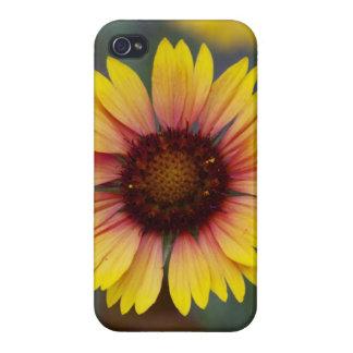 Foto de la margarita floral iPhone 4/4S carcasas
