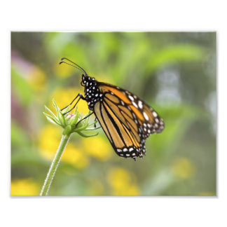 Foto de la mariposa de monarca fotografía
