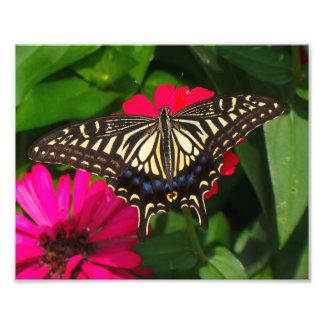 Foto de la mariposa de Swallowtail Fotografías
