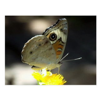 Foto de la mariposa del castaño de Indias en Tarjetas Postales