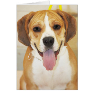 Foto de la mezcla del Beagle-Dogo Tarjeta De Felicitación