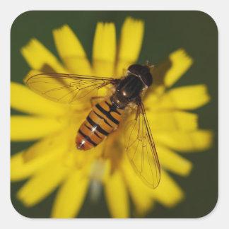 Foto de la mosca de la libración pegatina cuadrada
