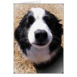 Foto de la nariz de perro felicitaciones