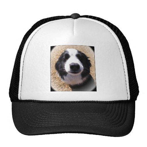 Foto de la nariz de perro gorras de camionero