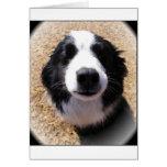 Foto de la nariz de perro tarjetas