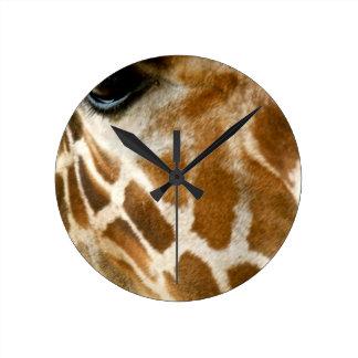 Foto de la naturaleza de animales salvajes de la c reloj